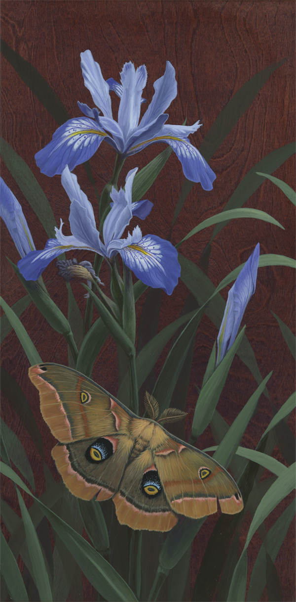 Polyphemus Moth and Irises 600 copy