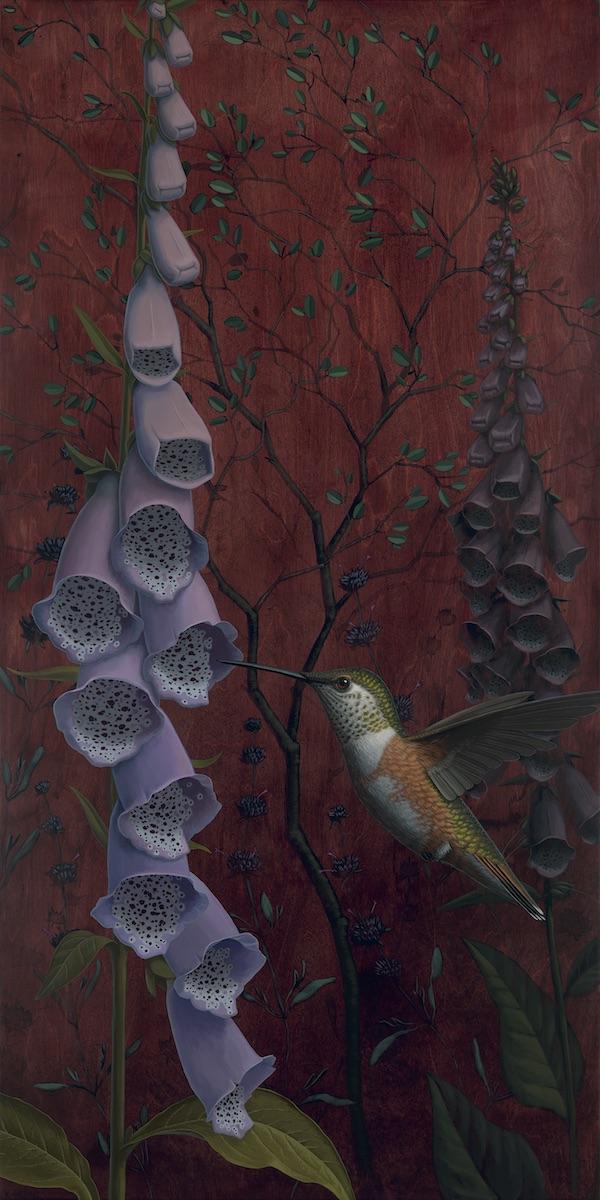 Allens Hummingbird & Foxglove_600