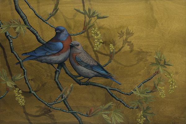 Western Bluebirds_600