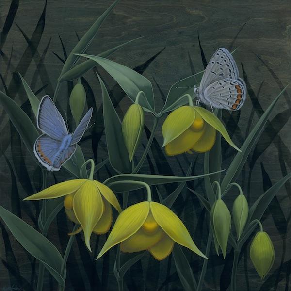 Yellow Globe Lily_600